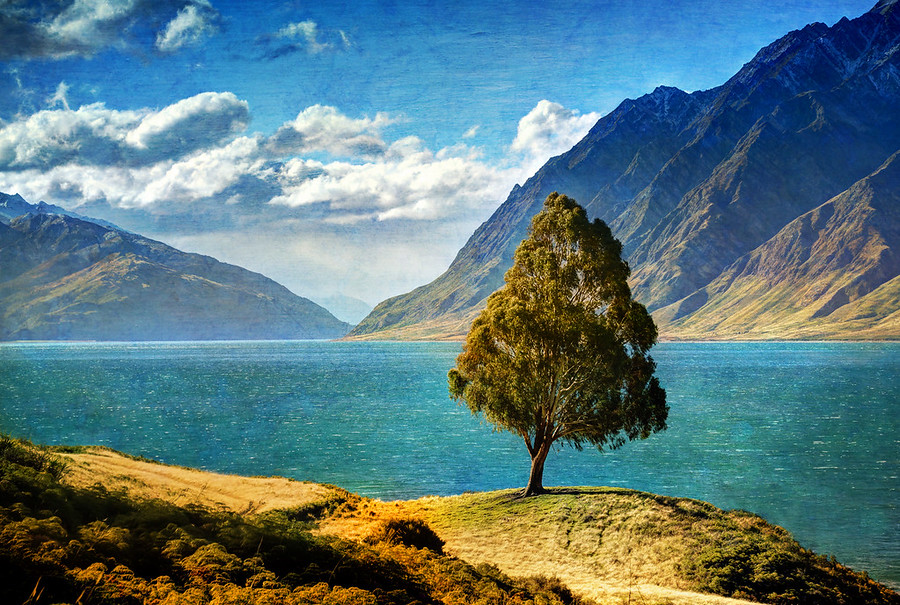 Tree New Zealand Wanaka Lake Hawea