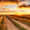 "<h2>The Lonely Road to the Dinosaur Dig</h2> <br/>It was an amazing week out with Jack Horner and his crew.  We could not have been any more remote!  Out deep in the wheat fields of Montana, we were met every morning with amazing sunrises and the evenings had these surreal sunsets.<br/><br/>- Trey Ratcliff<br/><br/><a href=""http://www.stuckincustoms.com/2008/08/15/the-lonely-road-to-the-dinosaur-dig/"" rel=""nofollow"">Click here to read the rest of this post at the Stuck in Customs blog.</a>"