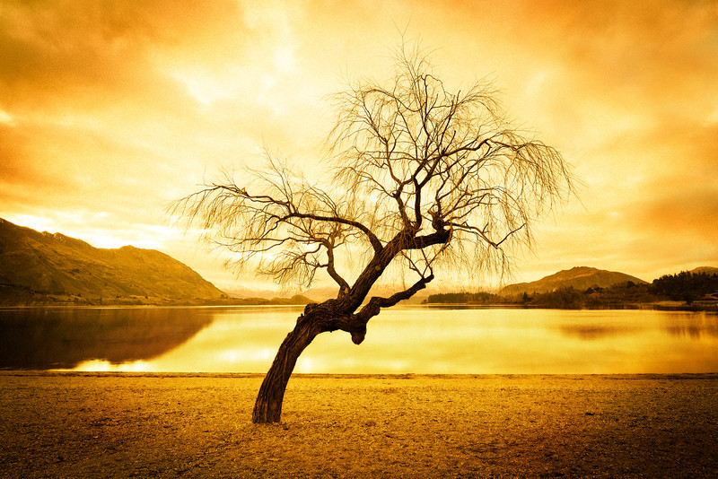 "<h2>Lonely Tree in Wanaka</h2><br/>This is one of three tree photos I will publish over the coming weeks. You may remember a previous one where the bottom of the trunk was on fire… that one DID have a bit of Photoshop… We'll also go over that one in the class.<br/><br/>- Trey Ratcliff<br/><br/><a href=""http://www.stuckincustoms.com/2012/07/18/lonely-tree-in-wanaka/"" rel=""nofollow"">Click here to read the entire post at the Stuck in Customs blog.</a>"