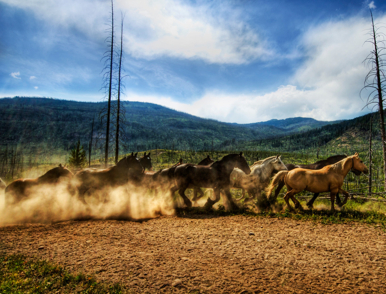 Stampede of the Wild Horses After a long hike through the mountains of Yellowstone, I came across over 40 horses sprinting from one meadow to the next.  I stepped behind a tree to get out of the way and shot this one.- Trey RatcliffClick here to read the rest of this post at the Stuck in Customs blog.