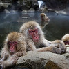 "<h2>Sleeping Snow Monkeys</h2> <br/>This was not an easy place to find! <br/><br/>I've always wanted to come see the wild snow monkeys... and so I just decided to make it happen this trip.  Way up in the mountains of Japan, near Nagano, there is a troop of several dozen wild snow monkeys that roam all around a set of mountains.  I didn't know if I'd be lucky enough to catch them or not... some say it is hard, and some people say it is easy.  But you never really know!  I set out to do my best and see what I could find.<br/><br/>Towards the very top of the cold mountain, there is a hot spring that churns out super-heated water that smells of sulfur.  It fills this little pool and the monkeys come down during the day to lounge about, play, rest, eat, and all kinds of other wonderful things.<br/><br/>I spent two days on this mountainside.  In the evening, I slept on the floor of a nearby ryokan, which is a traditional Japanese inn.  There are about 30+ more stories about things that happened here, including eating crunchy crickets, but I will leave those to accompany future photos.<br/><br/>- Trey Ratcliff<br/><br/><a href=""http://www.stuckincustoms.com/2010/04/19/snow-monkeys-of-japan/"" rel=""nofollow"">Click here to read the rest of this post at the Stuck in Customs blog.</a>"