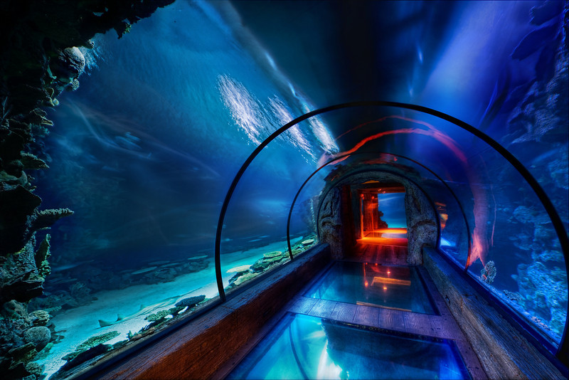 "<h2>The Secret Underwater Passage</h2> <br/>This was shot under the Mandalay Bay hotel in Las Vegas where they have this lavish aquarium.  It's really gorgeous and dreamy under there, as you can tell.  This area has all kinds of sharks and other wild-lookin' things that were swimming all around me.  I was fortunate enough to take a private tour of the place thanks to the nice people at the MGM/Mirage management company, who also owns the Mandalay Bay.  That allowed me to take the time I needed to set up this 5-exposure HDR shot without tourists getting in the way.<br/><br/>One time I did find a nurse shark in the Caribbean.  It was a baby.  I followed it for a while until it occurred to me that it might be swimming back to its mom.  That sudden realization made me turn around pretty quick.<br/><br/>All of this underwater stuff reminds me of watching those Discovery channel shows about strange ocean creatures.  I swear I could watch those things all day.  I can't get over how some of these things have evolved to fit their environment... just amazing.  My favorite creatures are cephalopods ... I never get tired of those documentaries!<br/><br/>- Trey Ratcliff<br/><br/><a href=""http://www.stuckincustoms.com/2009/06/25/the-secret-underwater-tunnel/"" rel=""nofollow"">Click here to read the rest of this post at the Stuck in Customs blog.</a>"