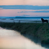 "<h2>The Silent Horse in the Fog</h2> <br/>Every night around 2 AM in Iceland was like a dream.<br/><br/>I'm always enjoyed staying up late...  As Sarah McLachlan says, ""Night is my companion.""<br/><br/>Sometimes, after midnight is when things really start to flow, so my two-week sleep reversal of staying up all night to drive around Iceland was a trippy experience.  The weather was always strange.  Sometimes sunny, sometimes cloudy -- but always with a tinge of the surreal.<br/><br/>- Trey Ratcliff<br/><br/>Read the rest of this post, including some news on the latest eBook, <a href=""http://www.stuckincustoms.com/2010/06/25/the-silent-horse-in-the-fog/"">here.</a>"