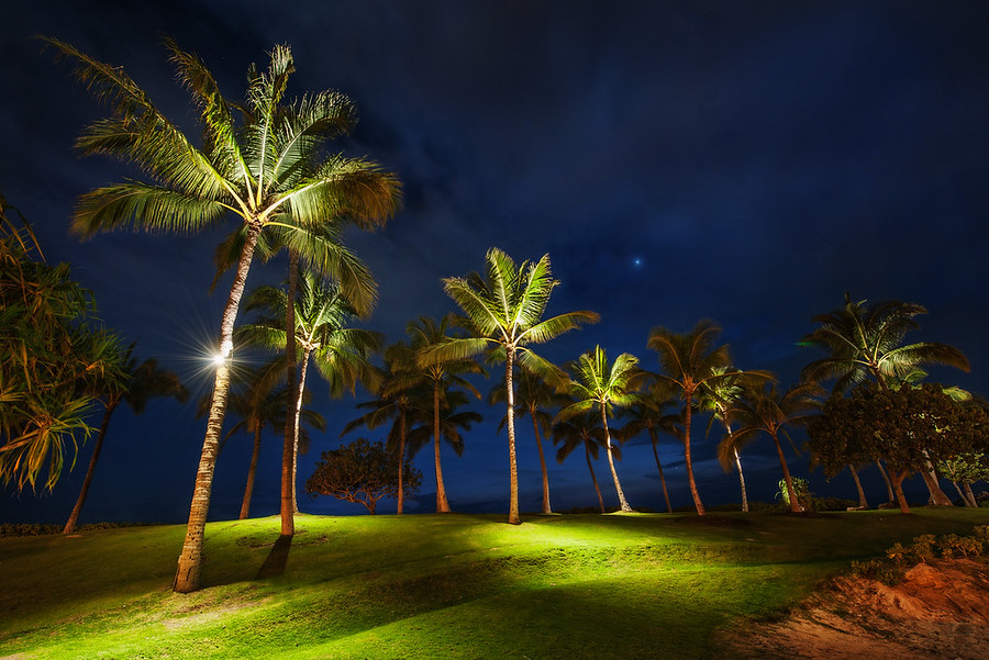 Palm Trees at NightOne night in Oahu we were doing some photography along a beach.  Off in the distance we saw some palm trees that were lit from the bottom.  It was about a quarter mile from anything else, so that was sort of strange.  But I thought it was so interesting to see them lit from the bottom with small green pools of light underneath that I decided to walk over there and see what was going on.  After I got over there, there were endless compositions of these various trees.  I grabbed about five different angles and then took a midnight-nature break of my own...-Trey RatcliffCheck out the full post at the Stuck in Customs blog.