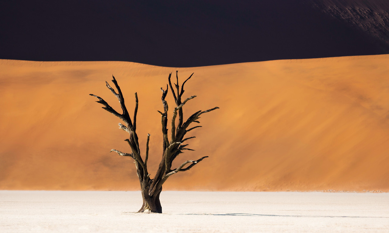 Alone In The Desert
