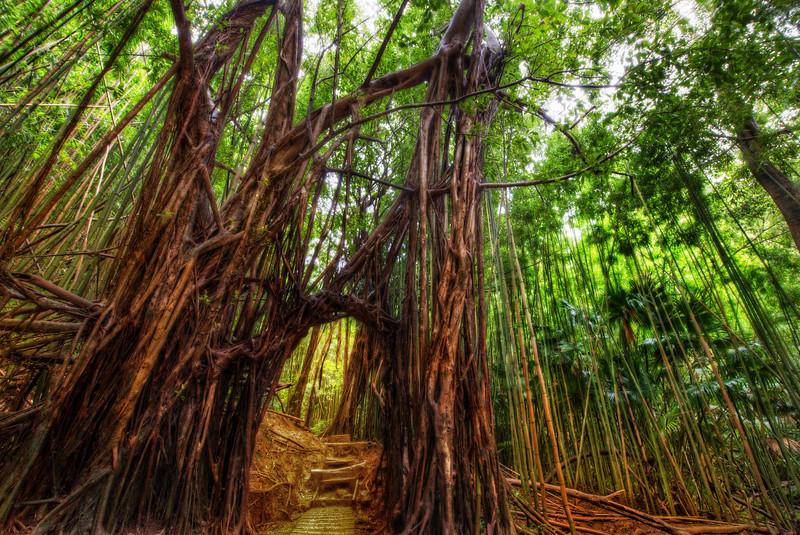 "<h2>The Secret Path Through the Bamboo Forest</h2> <br/>I went on a hike through an amazing old forest while on Oahu. It was a wet and rainy day, and the muddy path was so slippery — there was almost a negative friction!<br/><br/>At one point about halfway into the hike, we came across this natural door over the pathway formed by the trees. I took a break from the slipping and sliding to get a photo.<br/><br/>At the end of the hike, we found a hose down at the bottom… we hosed each other off like a couple of dogs in heat…<br/><br/>- Trey Ratcliff<br/><br/><a href=""http://www.stuckincustoms.com/2012/10/27/art-of-photography-tutorial-on-sale/"" rel=""nofollow"">Click here to read the rest of this post at the Stuck in Customs blog.</a>"