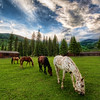 "<h2>Horses on an Evening Meadow</h2> <br/>Every night before sunset, the horses would be let out of the corral for a bit of ""personal"" time.  They spent almost no time at all on the Internet, and, instead, just meandered around this grassy meadow at the ranch. <br/><br/>The grass looks nice eh?  And there was no lawn-mowing necessary. <br/><br/>- Trey Ratcliff <br/><br/>Read the rest, including a discussion on some Topaz issues, <a href=""http://www.stuckincustoms.com/2010/07/27/topaz-cs5/"">here.</a>"