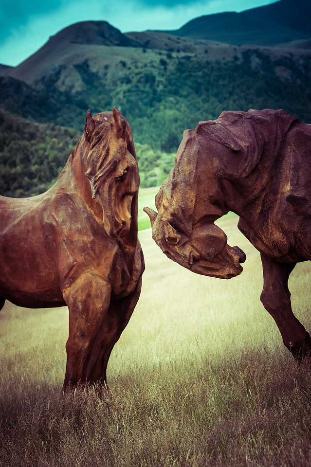 Friendly Horses in the Field
