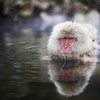 A Few of my Favorite Photos from Japan - The Snow Monkey - Trey RatcliffClick here to read the rest of this post at the Stuck in Customs blog.