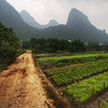 "<h2>Gardens in the Mist</h2> <br/>The Li River valley is a beautiful and serene area of southern China that's green, alive, and mysterious.  The verdant limestone cliffs cover the landscape and give everything an ethereal feel.<br/><br/>After a trip down the river, I got off the boat and decided to hike back to the little village where I was staying.  Along the way, I decided to hike down a side-road that went off into these little family-run farms.  I set up for a shot on this quiet dirt road.<br/><br/>- Trey Ratcliff<br/><br/><a href=""http://www.stuckincustoms.com/2011/01/13/gardens-in-the-mist/"" rel=""nofollow"">Click here to read the rest of this post at the Stuck in Customs blog.</a>"
