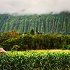 """<h2>Rain in the highland cliffs</h2><br/>The rain in Hawaii never seemed to stop!<br/><br/>But, the good news was that it kept everything green and glowing with a golden hue in the daytime. There is that kind of """"wetness"""" of a place that is hard to describe. I hope I caught it okay here…<br/><br/>Tom and I walked around this farm for a while before we were approached by people working there. They wanted to figure out what the heck we were doing, but once they saw we were just innocent photographers, they let us go ahead and take photos. That was nice… once people figure out that photographers are mostly harmless, they let us have free reign! :)<br/><br/>- Trey Ratcliff<br/><br/><a href=""""http://www.stuckincustoms.com/2012/06/30/rain-in-the-highland-cliffs/"""" rel=""""nofollow"""">Click here to read the entire post at the Stuck in Customs blog.</a>"""