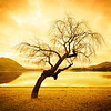 """<h2>Lonely Tree in Wanaka</h2><br/>This is one of three tree photos I will publish over the coming weeks. You may remember a previous one where the bottom of the trunk was on fire… that one DID have a bit of Photoshop… We'll also go over that one in the class.<br/><br/>- Trey Ratcliff<br/><br/><a href=""""http://www.stuckincustoms.com/2012/07/18/lonely-tree-in-wanaka/"""" rel=""""nofollow"""">Click here to read the entire post at the Stuck in Customs blog.</a>"""