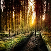 """<h2>Old Forest in Yosemite</h2><br/> When I was walking through this forest, we had a photowalk-of-sorts going on with a ton of people going here and there.  It was sort of Ewok-like with all the activity.  We'd all have to ask one another to hide behind trees and duck out of the way, since we were all criss-crossing our shots this way and that.  Often times, the shot I really wanted to get required me to clamber up and over big fallen trees.  There's not really a graceful way to do this.  No matter how many times I do it, I continually look like I'm just barely keeping it together…<br/><br/>- Trey Ratcliff<br/><br/><a href=""""http://www.stuckincustoms.com/2012/05/24/old-forest-in-yosemite/"""" rel=""""nofollow"""">Click here to read the rest of this entry at the Stuck in Customs blog.</a>"""