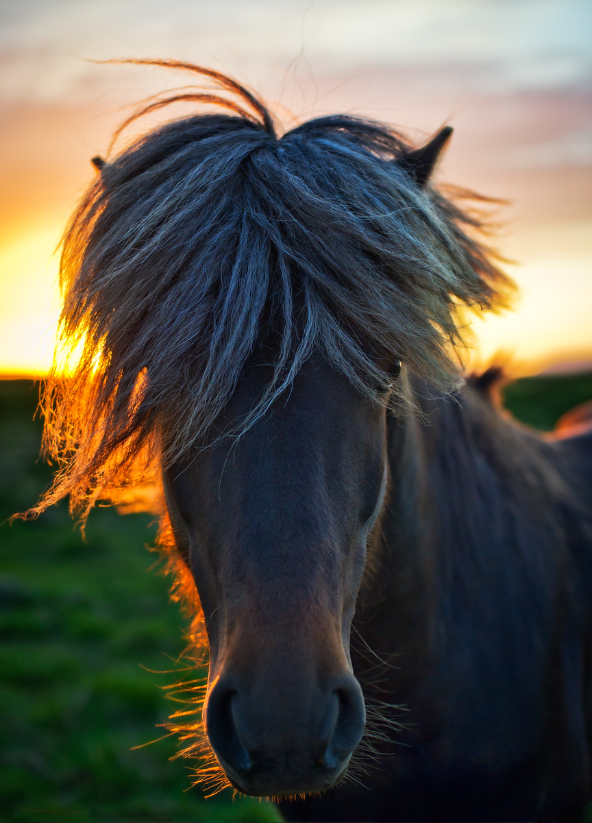 The Horse of Sagas I was in the middle of a beautiful drive in Northern Iceland just past midnight.  The sun was about to dip below the horizon, and I was in the last hour of a five-hour sunset.  Unbelievable!  I passed a perfect grassy farm filled with perfect Icelandic horses ...- Trey RatcliffClick here to read the rest of this post at the Stuck in Customs blog.  Read the rest at the Stuck in Customs blog.
