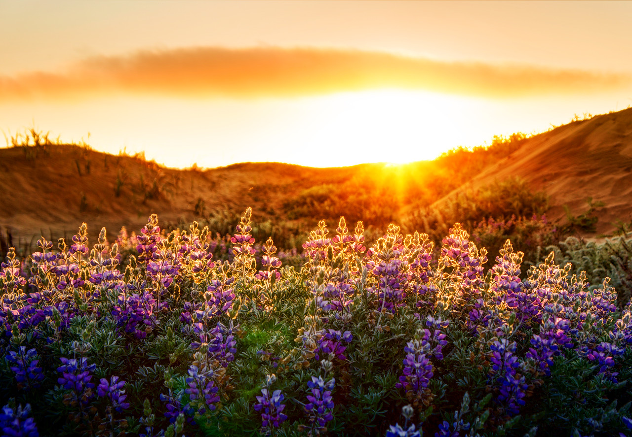 The Lupines at SunsetSo here is a cool thing about this photo that one might not guess. This was taken with a Sony NEX-7 and the kit lens! Yes, the kit lens.This was shot on Baker Beach in San Francisco one evening when I was exploring…. I was double-fisting it with two cameras… and I saw this quick scene so I went for this experimental shot.- Trey RatcliffClick here to read the entire post at the Stuck in Customs blog.