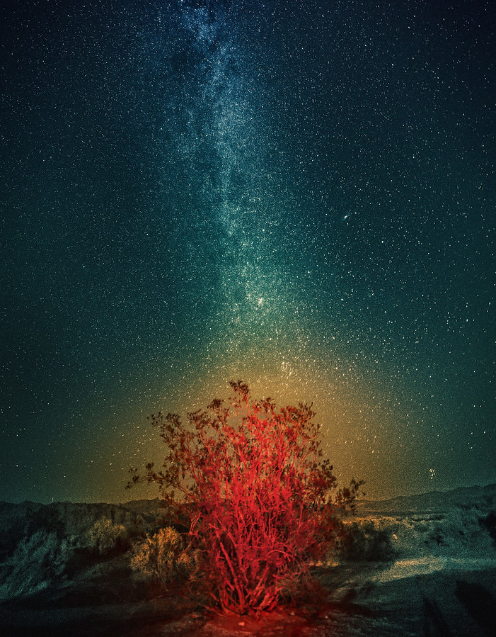 Bush Desert Milky Way