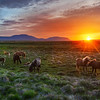 """<h2>Tableau Vivant Of Wild Horses</h2><br/>It was about 2 A.M. and the sun was just dipping into the horizon for a short stint. These horses were frolicking about in a huge flat field a bit inland from the end of the fjord. They were all so lively and alert, jumping and posing here and there. And then they set up in a very interesting configuration, and I barely had time to put on the right lens before it all drifted apart.<br/><br/>- Trey Ratcliff<br/><br/><a href=""""http://www.stuckincustoms.com/2012/06/25/tableau-vivant-of-wild-horses/"""" rel=""""nofollow"""">Read the entire post at the Stuck in Customs blog.</a>"""