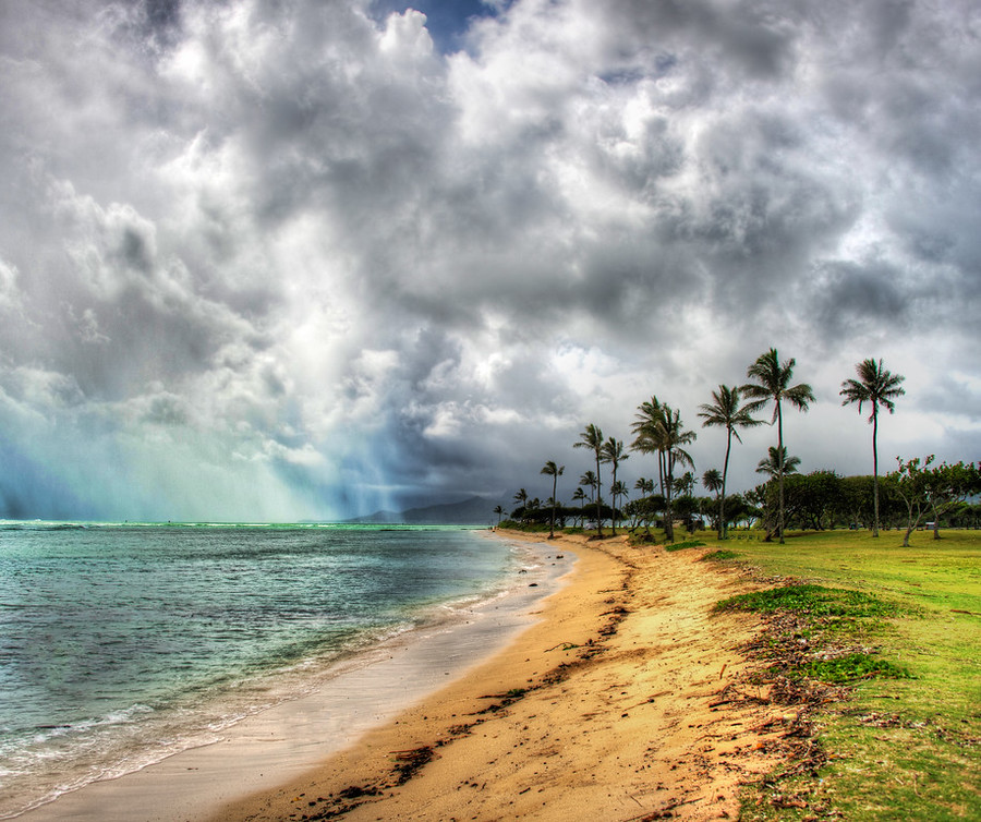 Beach palm tree oahu