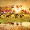 Walking Full of Wonder