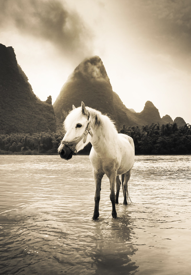 Wild Horse On The Li River