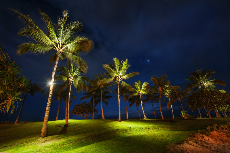 """<h2>Palm Trees at Night</h2> One night in Oahu we were doing some photography along a beach.  Off in the distance we saw some palm trees that were lit from the bottom.  It was about a quarter mile from anything else, so that was sort of strange.  But I thought it was so interesting to see them lit from the bottom with small green pools of light underneath that I decided to walk over there and see what was going on.  After I got over there, there were endless compositions of these various trees.  I grabbed about five different angles and then took a midnight-nature break of my own...<br/><br/>-Trey Ratcliff<br/><br/><a href=""""http://www.stuckincustoms.com/2012/04/19/palm-trees-at-night/"""" rel=""""nofollow"""">Check out the full post at the Stuck in Customs blog.</a>"""