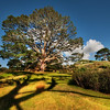 """<h2>Bilbo's Hobbit Hole and the Party Tree in the Shire</h2> <br/>I showed my 8-year-old son all the Lord of the Rings movies prior to our trip to NZ.  He then re-watched the first one three times on the car trip... so he was just as excited as I when we arrived.<br/><br/>You might remember Bilbo Baggins' hobbit hole and all the scenes with Frodo and Gandalf inside.  That is it right there, on the right hand side at the top.  The huge tree on the left is the """"party tree"""", which was the centerpiece for the big party for Bilbo's birthday.  It was the one of the main reasons that Peter Jackson chose this remote farm outside of Matamata on the North Island.<br/><br/>- Trey Ratcliff<br/><br/><a href=""""http://www.stuckincustoms.com/2010/03/07/hobbit-shire/"""" rel=""""nofollow"""">Click here to read the rest of this post at the Stuck in Customs blog.</a>"""