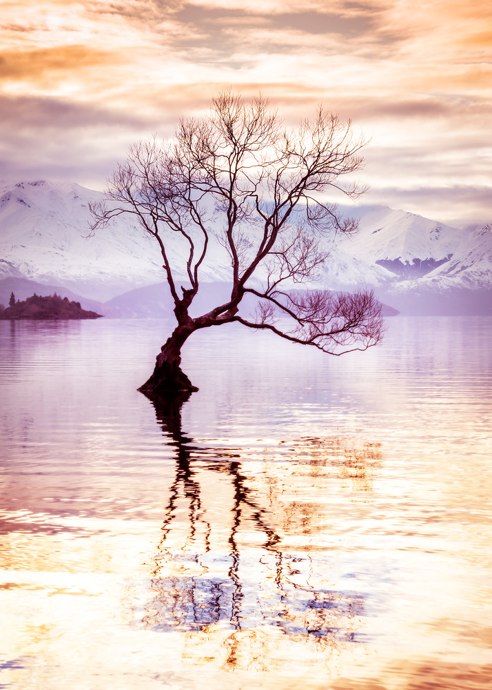 Peaceful Evening in Wanaka I had a peaceful evening in Wanaka. There is this tree that sits out in the middle of the lake. It's so unusual. I love the way it reflects back on itself in the smooth water. I was by myself, listening to music on my iPod, and just watching the water as it would calm down then get excited, then calm down again. I swapped out lenses a few times and kept moving around to admire it from different angles. This one was one of my favorites. - Trey RatcliffClick here to read the rest of this post at the Stuck in Customs blog.