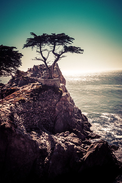 """<h2>The Lone Cypress Tree</h2> <br/>This is kind of a famous tree, I think. Well, I guess it's famous if you've heard of it, otherwise it's completely unknown. It's one of those things you find out is famous, and then every time you see it, you think, """"Oh that is the famous tree.""""<br/><br/>It's kind of like when you play trivia games with annoying people. You know the ones. Every now and then, a question comes up that is INCREDIBLY TRIVIAL and some annoying person will guffaw, """"Oh My God, that is sooooo easy!"""" Of course it is easy if they happen to know this incredibly small piece of arcane information! Either you know it, or you don't.<br/><br/>- Trey Ratcliff<br/><br/><a href=""""http://www.stuckincustoms.com/2013/04/06/the-lone-cypress-tree/"""" rel=""""nofollow"""">Click here to read the rest of this post at the Stuck in Customs blog.</a>"""