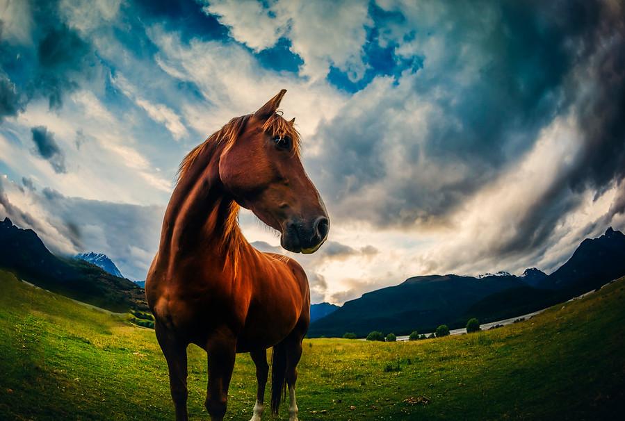 horse new zealand paradise