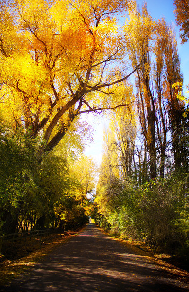 Autumn in Queenstown, Spearglass Flats Road