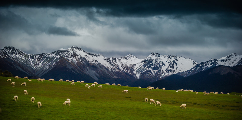 "<h2>Sheepstorm</h2> <br/>On the drive down to Te Anau from Queenstown, you pass countless fields of sheep with dramatic mountain backdrops. I think sheep in fields are already pleasant enough to look at, but it gets even better when there is drama in the mountains and drama in the skies!<br/><br/>I'm not exactly the Sheep Whisperer yet, but I have noticed that you have to be quiet as a mouse when approaching a fence to take a photo. If just ONE of them gets scared and runs, they ALL get scared and run.<br/><br/>- Trey Ratcliff<br/><br/><a href=""http://www.stuckincustoms.com/2012/12/27/sheepstorm/"" rel=""nofollow"">Click here to read the rest of this post at the Stuck in Customs blog.</a>"