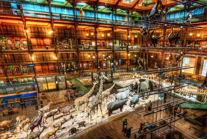 "<h2>A Night at the Museum</h2><br/>This is one of the final photos I was able to squeeze off before the security guards nabbed me. Arg! I wanted to get so many more… but you know, you know… it's the same old story.<br/><br/>Anyway, if you ever visit Paris, you absolutely need to make it over here to the museum of natural history. It's known to the locals, but not to visitors. All the other sites in Paris are great, of course… but if you have a penchant for science and a love of crazy interior design, this is the place for you!<br/><br/>- Trey Ratcliff<br/><br/><a href=""http://www.stuckincustoms.com/2012/06/27/a-night-at-the-museum/"" rel=""nofollow"">Read the entire post over at the Stuck in Customs blog.</a>"