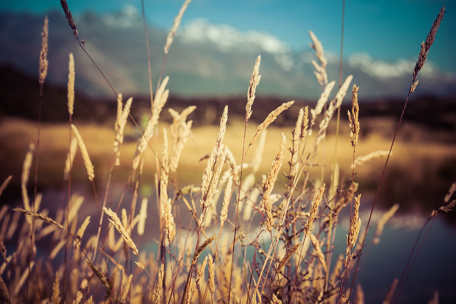 The Grasses along the Trails