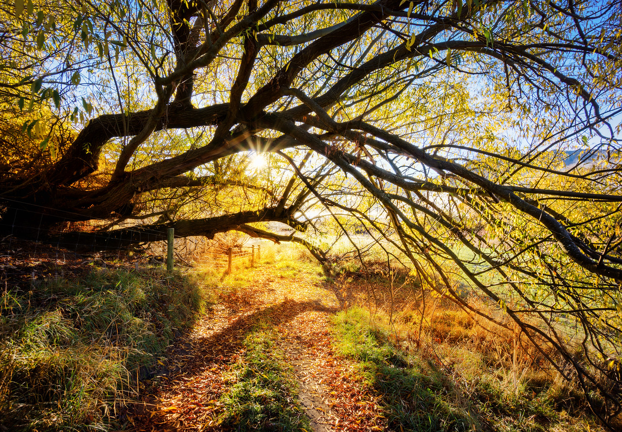 "Golden Tree Path When I took this photo, I was very happy! In many ways, it's the kind of place you can easily walk through and not notice because it was on the way to somewhere else. I was trying to walk down to Lake Hayes via a new route form my house, and I saw this on the way. I feel like I'm always alert, but then sometimes I'm looking at a scene like this and I think, ""Hey, I should take a photo!"" Anyway, I need to get better at this sort of thing… and take more photos on the way to the place rather than the place itself. - Trey RatcliffClick here to read the rest of this post at the Stuck in Customs blog."